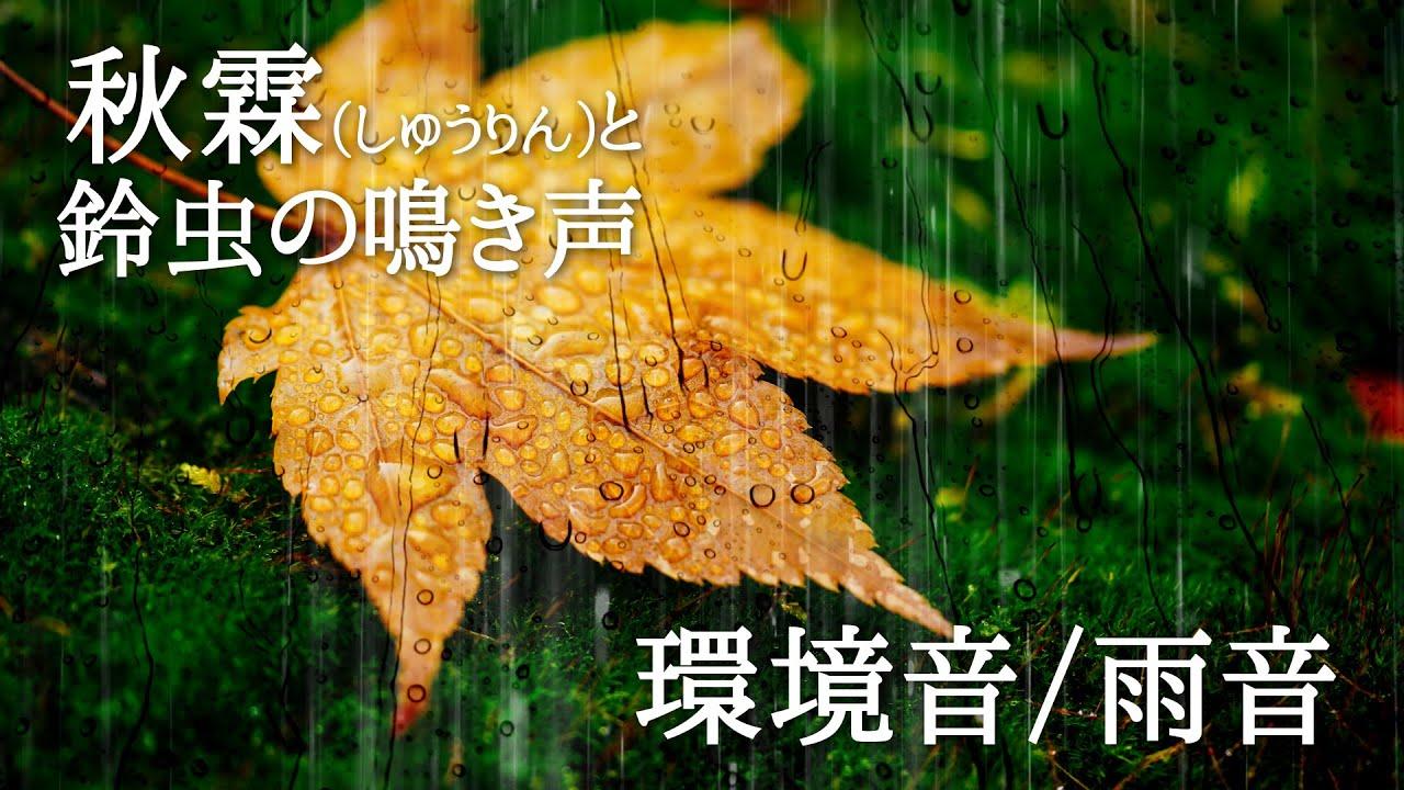 秋霖と鈴虫の鳴き声-雨音-☔:Relaxing Ambient ASMR Sounds -Rain-🎧