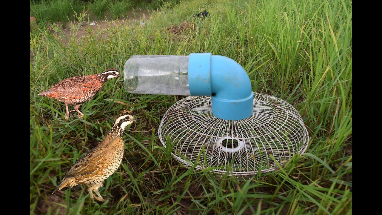 Awesome bird trap using plastice bottle pvc pipe and fan for How to make pvc pipe birds