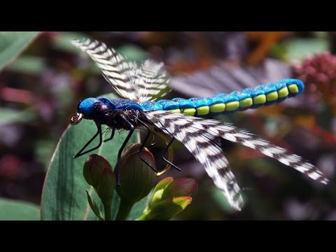 Realistic Adult Dragonfly  Fly Tying Class By Ruben Martin