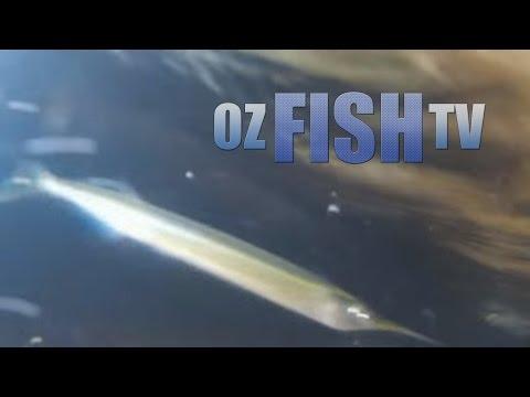 Oz Fish TV Season 3 Episode 7 - Coronet Bay Garfishing