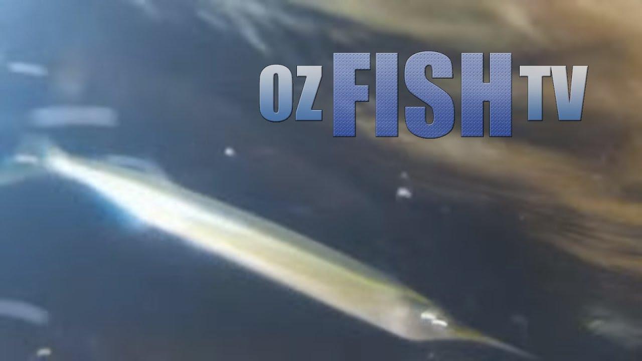 Download Oz Fish TV Season 3 Episode 7 - Coronet Bay Garfishing