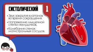 Аускультация сердца, основные тоны