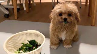 Lindo perrito comiendo hierba.