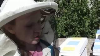 Видео для детского садика и посвящение в пчеловоды)))
