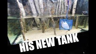 New aquariums for the fish