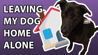 HOW TO KEEP YOUR DOG IN THE GARAGE | Three Legged Lab Dog Vlog