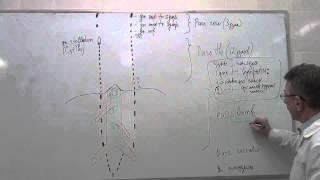 Вегетативная иннервация внутренних органов рисунок на доске
