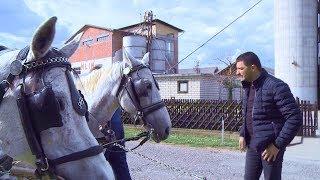 Crnjelovo - Konji - Poreznik Gavro (BN Televizija 2019) HD