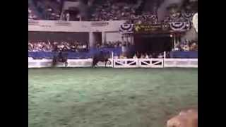 2003 Three Gaited World Grand Championship