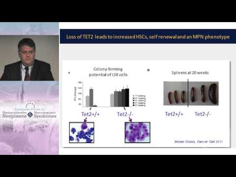 Current Understanding of a Genetic/Epigenetic Basis of Classic MPNs