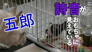 五郎は詩音の事犬のおもちゃに見えているのだろうか? Nana&Goro+Shion ...