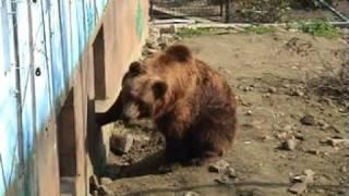 Beer Olmense Zoo
