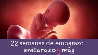 22 semanas de embarazo - Quinto mes - EMBARAZOYMAS