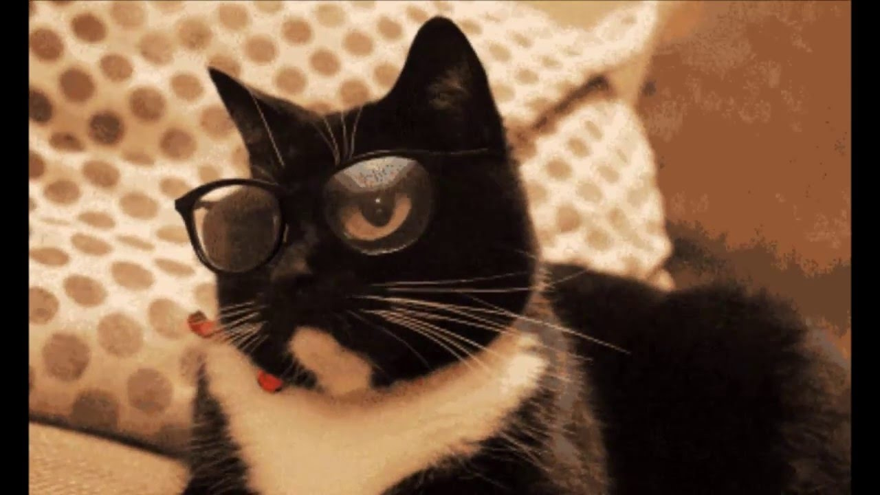 Funny Cats GIFs - YouTube