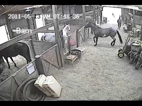 Horse Door Kicking & Door Latches