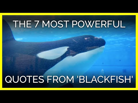 The 7 Most Powerful Quotes From 'Blackfish'