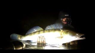 Трофей Судак на 8400 кг Ночная подводная охота Десна