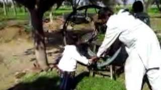 Preperation of Animal Feed on Pakistan Farm