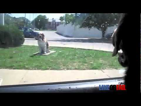 Dog Fights With a Statue Funny