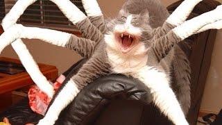 мегаловкий кот-паук