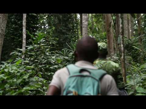 Elephant 1 - Lopé National Park, Gabon