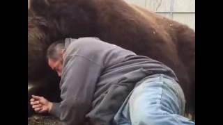 Real Big Bear just want a HUG.