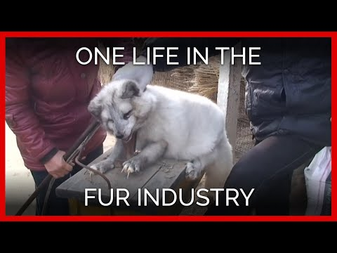Killing Animals For Fur Essay - image 9