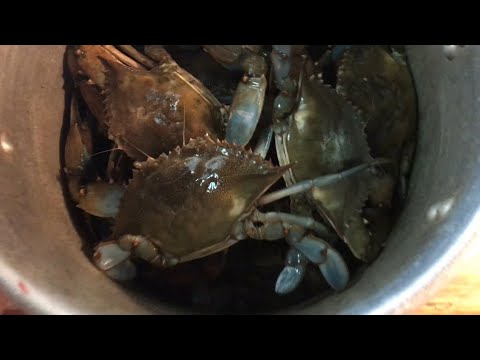 Catch And Cook GIANT Blue Crab The Fastest And Cheapest Way