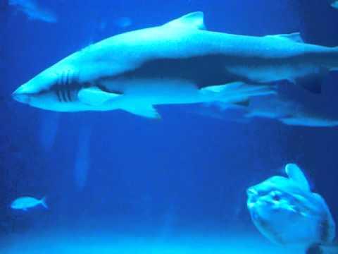 Oceanografic acuario de valencia espa a 4 youtube for Acuario valencia precio