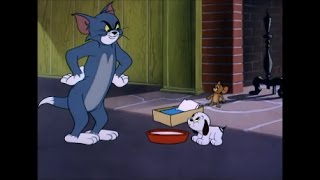 Tom and Jerry, 80 Episode - Puppy Tale (1954)