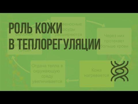Роль кожи в теплорегуляции. Видеоурок по биологии 8 класс