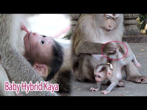 Newborn Baby Hybrid