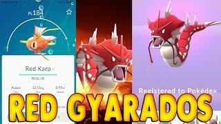 GYARADOS ROSSO - RED KARP EASTER EGG SU POKEMON GO thumbnail