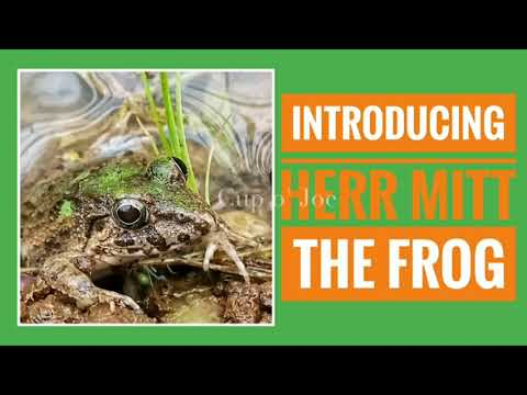 Don't Let People Tell You It Can't Be Done!*👉Meet Herr Mitt The Frog🐸 Subscriber Special 2K-ALMOST