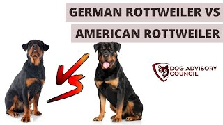 German Rottweiler vs American Rottweiler (The Differences)