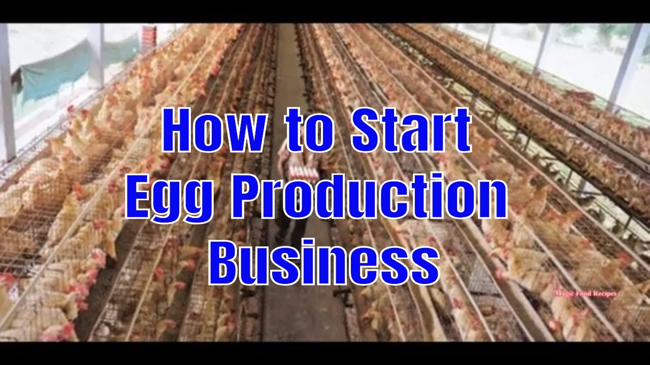 How to Start Egg Production Business in Nigeria