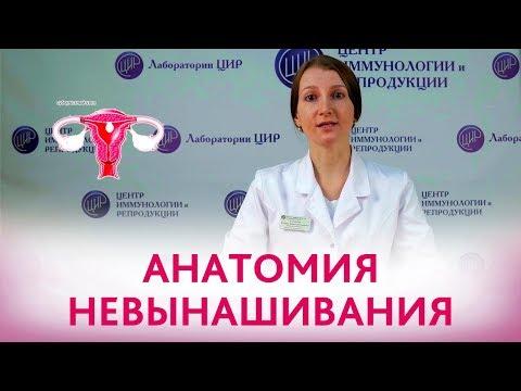 Невынашивание беременности. Анатомические факторы невынашивания беременности.