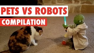 Download Pets Vs Robots Video Compilation 2016 Mp3 and Videos