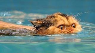 Забавные кошки любят воду. Сборник [HD]