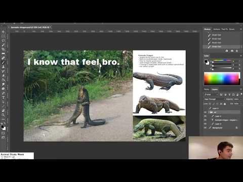 Animal Study Week: Komodo Dragon