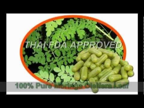 Moringa Oleifera plantation in Thailand Presented by Top Star Farm