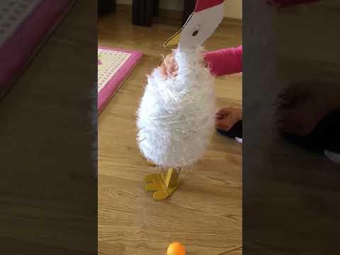 Yumurtlayan Tavuk