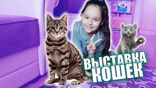 Выставка кошек и котов в Бобруйске