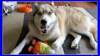 CAN DOGS EAT RAW PUMPKIN | Fan Friday 227