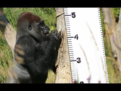 Animals at London Zoo have annual weigh-in