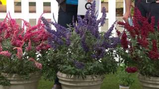 Cottage Farms 3-piece Garden Idols Butterfly Bush Collection with Kerstin Lindquist
