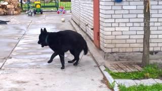 собака кусает себе хвост. Импульсивное психологическое расстройство.