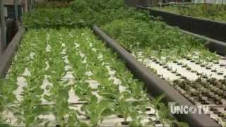 Aquaponics Farming of the Future | NCScienceNow | UNC-TV