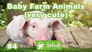 Baby Farm Animals Compilation - Cute Animals and Pets Compilation by Splash Production #4