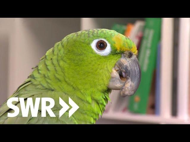 Ein Pferd, ein Papagei und ein Waran | SWR Tierarztgeschichten
